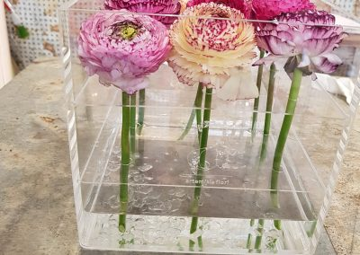 Artemisia box plaixiglass 3 (2)